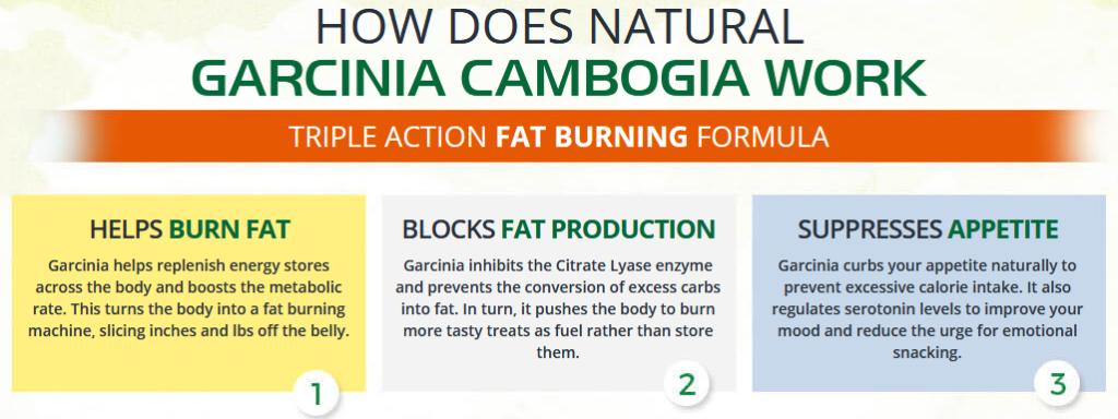 how natural garcinia works